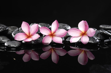 Set of frangipani and black pebbles