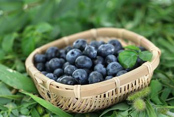 Blueberries in wooden basket on grass