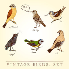 Set of vintage colored birds