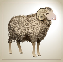 Vector Realistic Sheep with detailed wool
