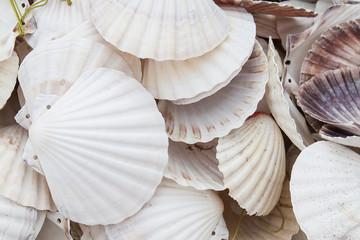 Marine shells at street shop