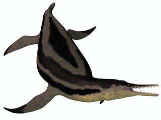 Dolichorhynchops Plesiosaur on White