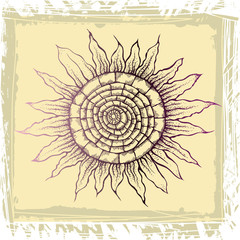 Hand drawn illustration - single sunflower