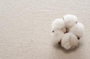 布の背景に綿の実のアップ