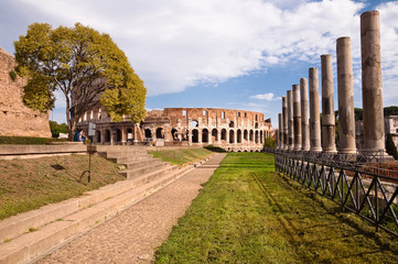 Wall Mural - Colosseo and venus temple columns path and tree view from Roman