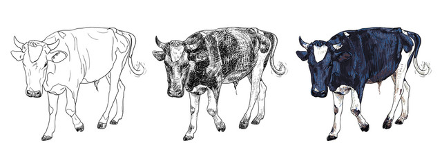 The drawing of black and white cow