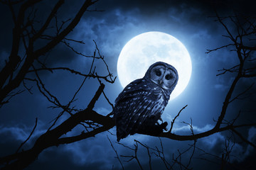 Fotoväggar - Owl Watches Intently Illuminated By Full Moon On Halloween Night