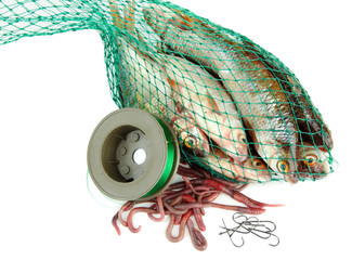 Fishes in fishing net isolated on white