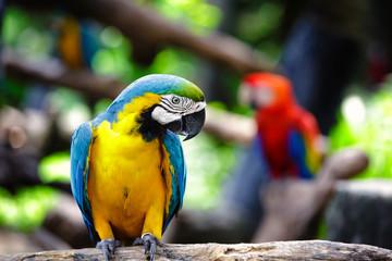Macaws - fototapety na wymiar