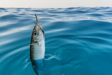 fish hooked