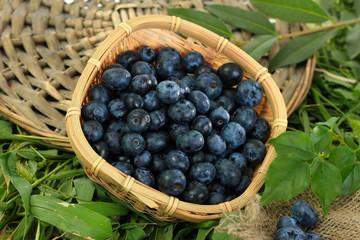 Blueberries in wooden basket on wicker tray on grass