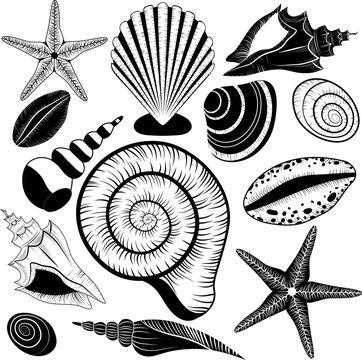 Shells collection. Vector set with seashells and starfish