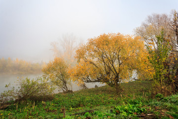 yellow tree in thick fog on autumn embankment