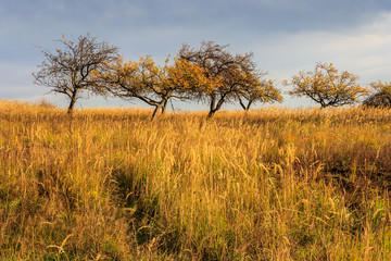 dry autumn trees and grass under a heavy gray sky