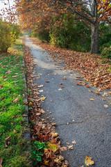 path along the green lawn