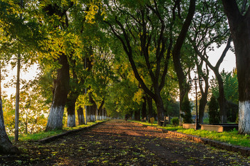 shadow of early autumn trees