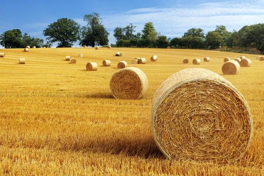Hay bales in golden field