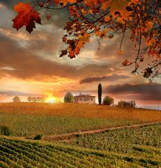 Wall Mural - Vine landscape in Chianti, Italy