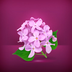 Lilac flowers, vector