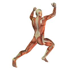 Wall Mural - Muskelstruktur beim Gewichtheber von hinten