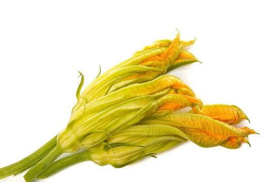 Zucchini flowers isolated