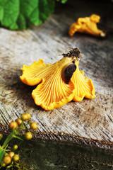 Mushrooms and a slug
