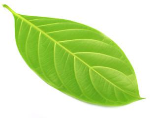 herbal decorative leaves