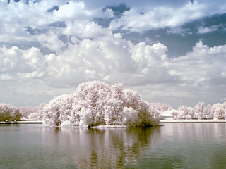 Palace pond. Infrared photo