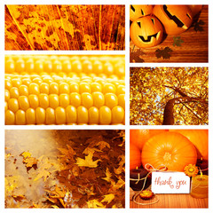 Autumn season collage