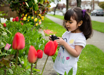 Young girl taking a picture of spring tulips