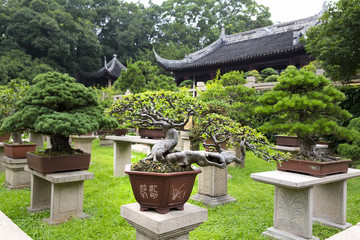 Bonsai Garden - Suzhou - China
