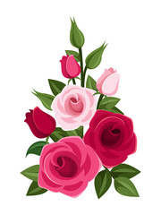 Branch of red and pink roses, buds and leaves. Vector.