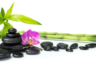 Wall Mural - purple orchid with bamboo and many stones