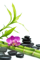 Wall Mural - purple orchid with bamboo and black stones - white background