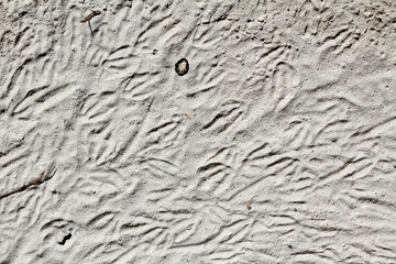 Bird footprints on sand background / texture