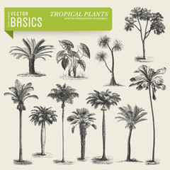 vector elements: tropical vegetation