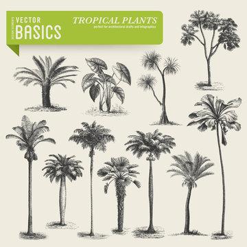 vector elements: tropical vegetation