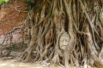 Head of Buddha in a tree trunk