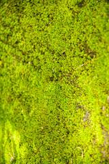 Moss on stone.