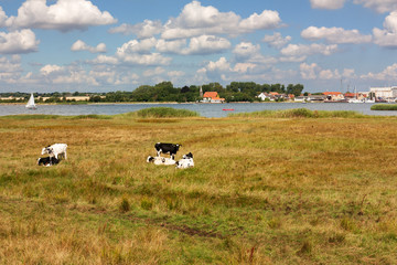 Fototapete - Grünland mit Kühen an der Schlei in Schleswig-Holstein