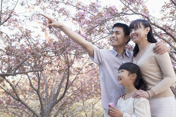 Smiling family looking up and admiring the cherry blossoms in the park in springtime, Beijing