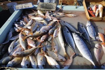 la pêche de Marseille