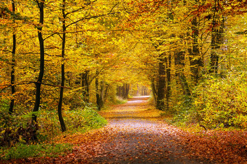 Wall Murals Road in forest Autumn forest