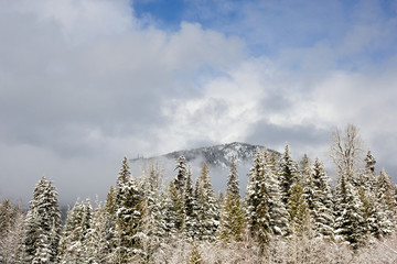 A mountain and fir trees