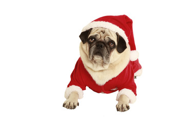 pug in santa claus costume lying