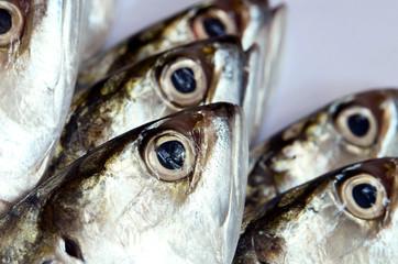 Fresh mackerels in head shot.