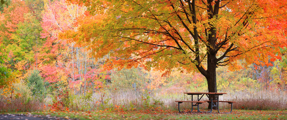 Spoed Foto op Canvas Herfst Relaxing autumn scene