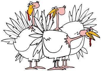 Small flock of turkeys