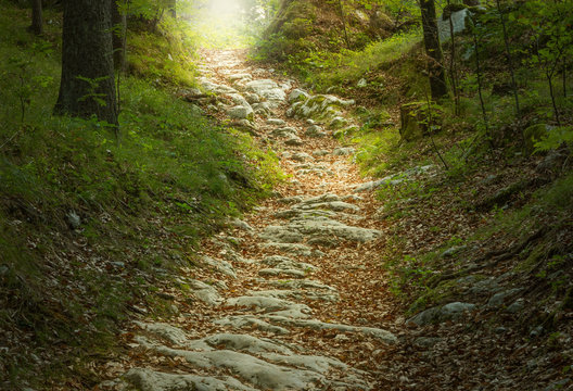 Märchenhafter Steinweg im Wald