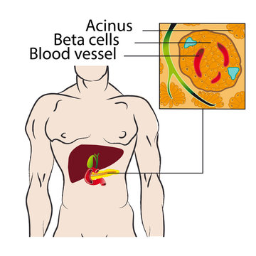 Insulin from the beta cells of the pancreas